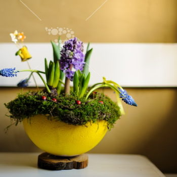 Colecția Sunny Spring