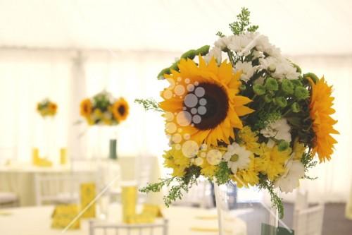 Decro_nunta la cort floarea_soarelui (10)